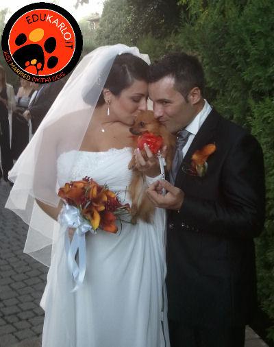 dogsitting per il giorno del matrimonio