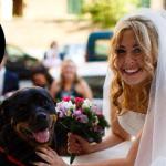 Un vero professionista del dogsitting per il giorno del matrimonio