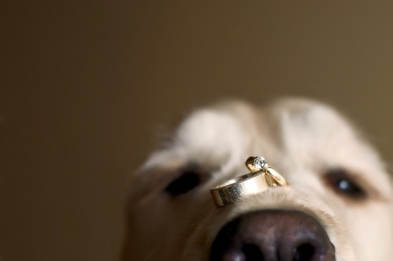 far partecipare il cane al matrimonio