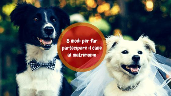 come far partecipare il cane al matrimonio